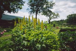 Hildene garden