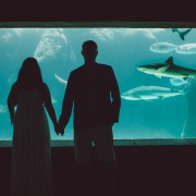 a wedding couple holding hands in front of the shark aquarium at Atlantis paradise island wedding