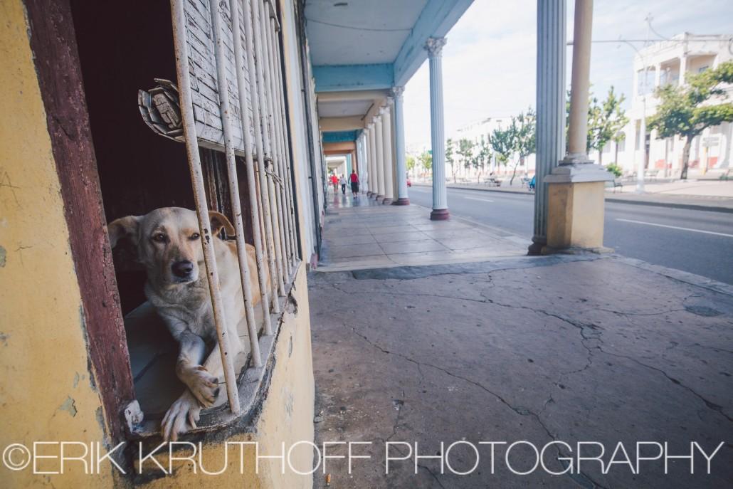 Dog in Cienfuegos, Cuba