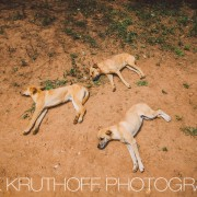 dogs-of-cuba-photography (17)