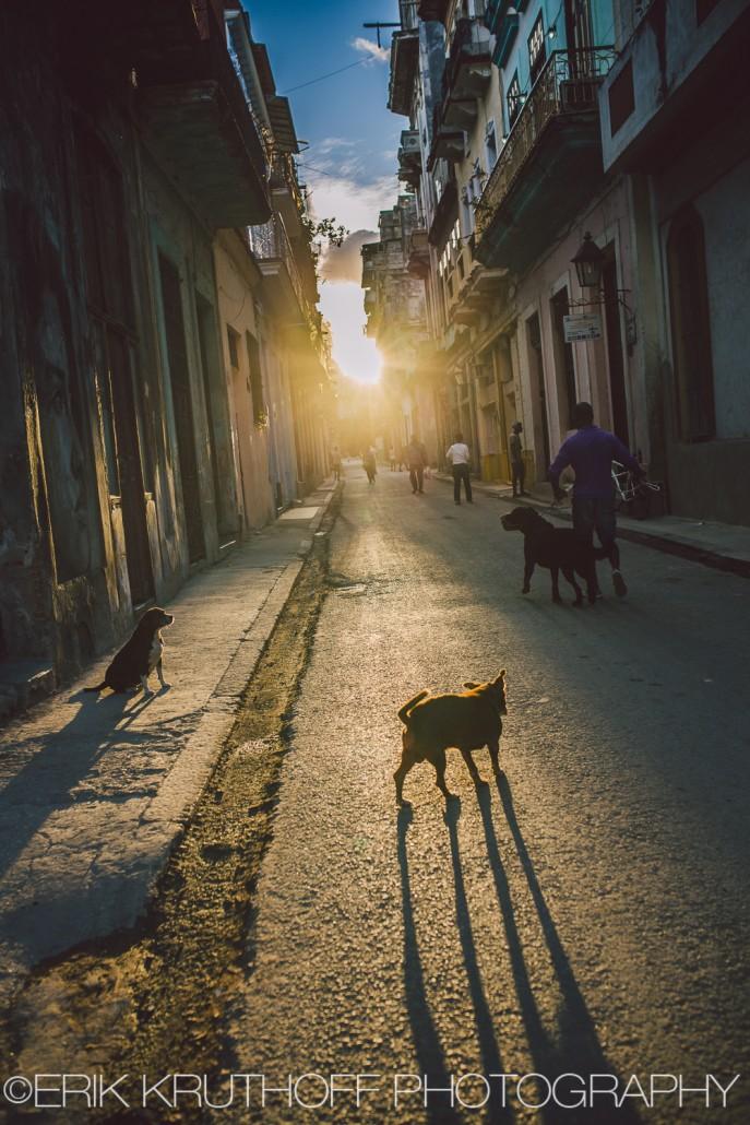 Havana, Cuba dog