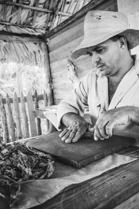 a cuban tobacco farmer demonstrates how to properly roll and prepare a cuban cigar
